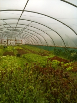 salads, tomatoes, herbs, brassicas grow here very happy.